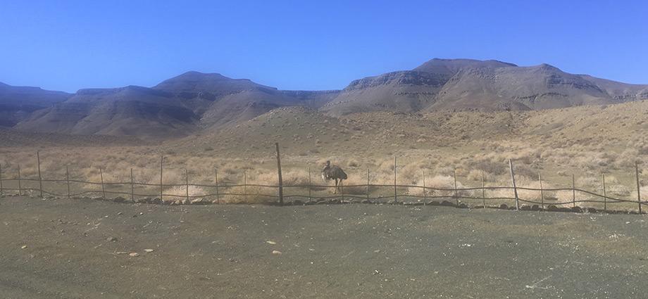 tankwa-karoo-wildlife