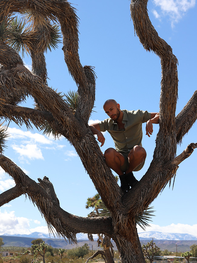 shop-desert-tribe-impala-shirt-up-in-tree-sitting-look-in-camera-landscape
