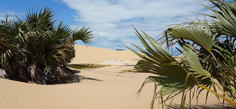 article-image-unique-islands-tropical-sand-dune-bazaruto-island-mozambique