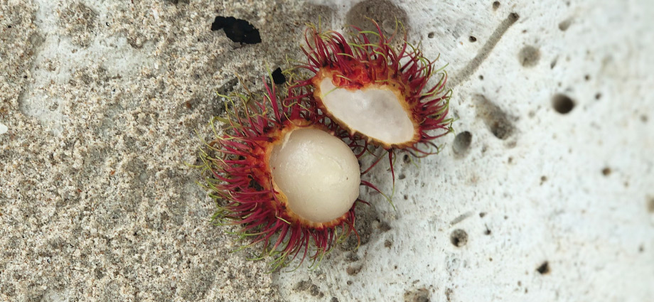 travel-unique-islands-fruit-hidden-island-close-to-bangkok