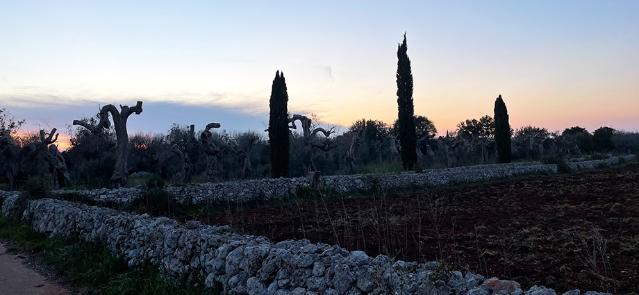 time-to-visit-south-italy-olive-groves