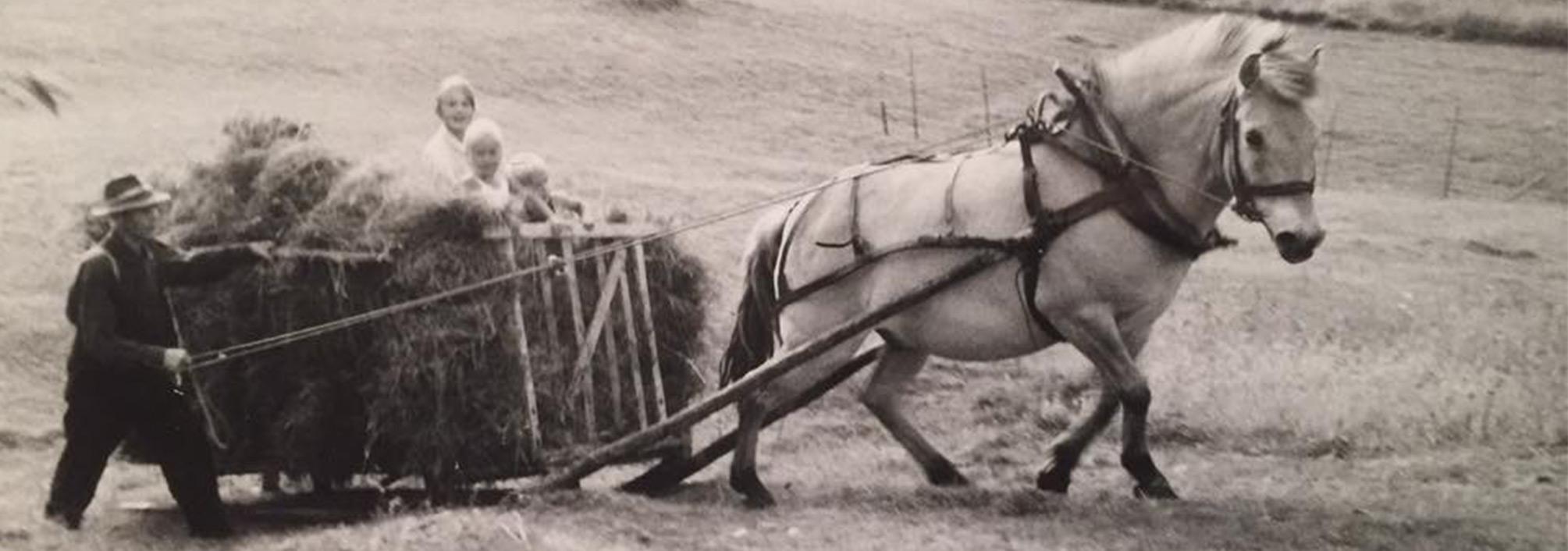 lifestyle-whats-your-story-har-vi-det-verre-enn-besteforeldrene-våre-haugebu-hesten