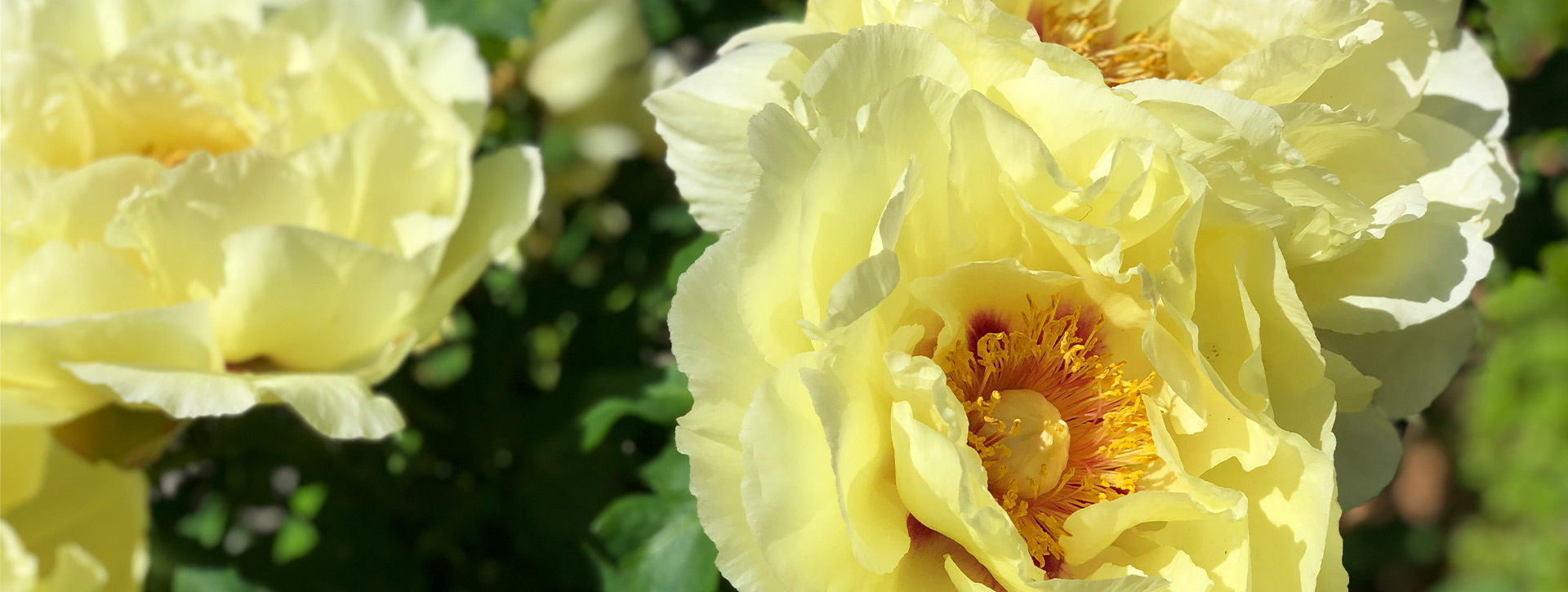 8 of Grandma's Best Garden Tips