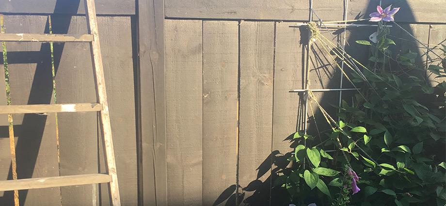 lifehacks-grandmas-best-garden-tips-pantyhose