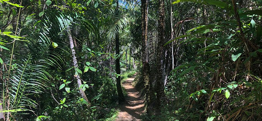 travel-beach-vacation-bahia-brazil-coolest-coast-jungle