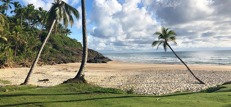 travel-beach-vacation-bahia-brazil-coolest-coast-palm-trees-beach