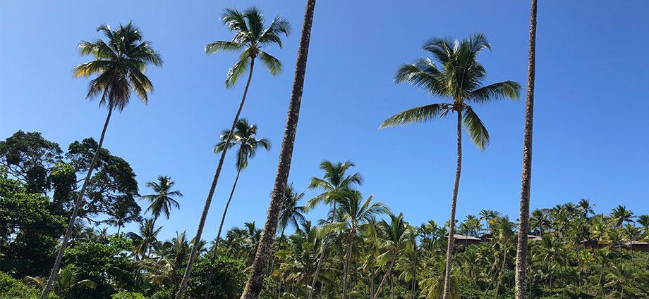 travel-beach-vacation-bahia-brazil-coolest-coast-palm-trees