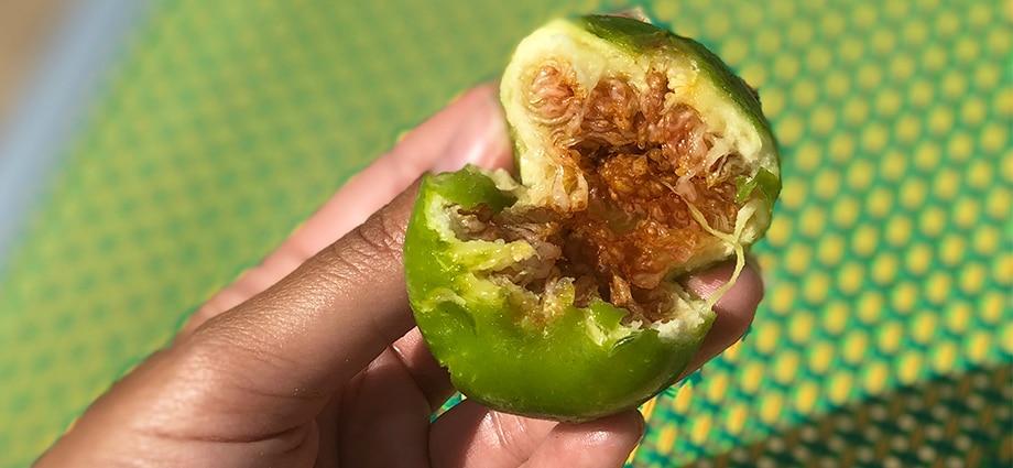 best-of-puglia-figs