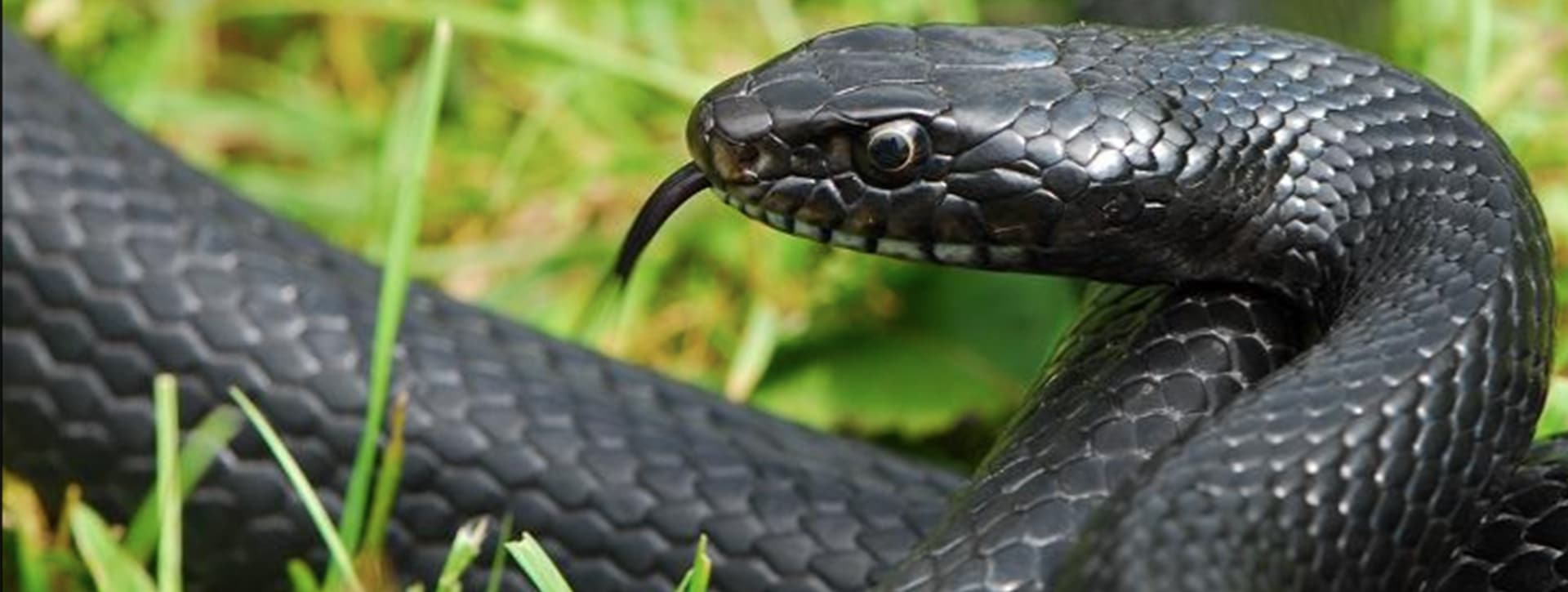 Snake Encounter: The Symbolic Meaning
